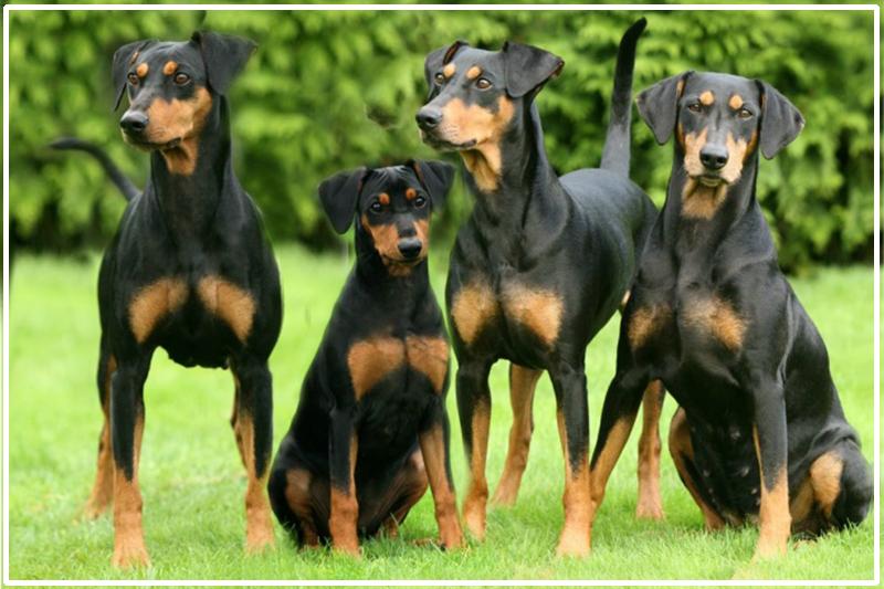 Onze honden